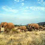 Tours and Safaris to Kenya